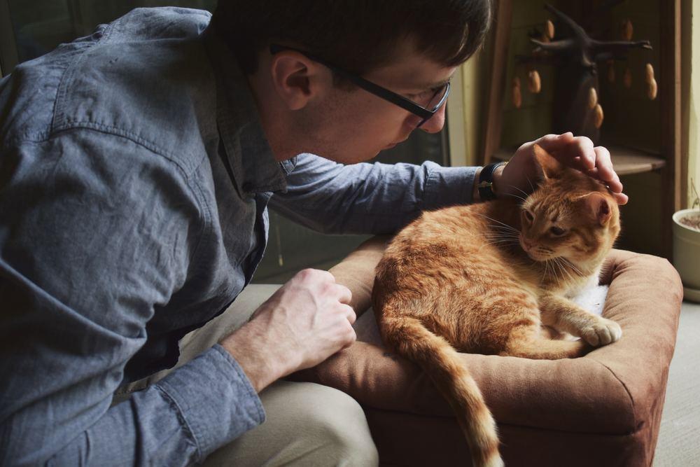 Vælg den rette dyreklinik i Værløse